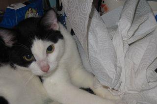 Paper Towel Max